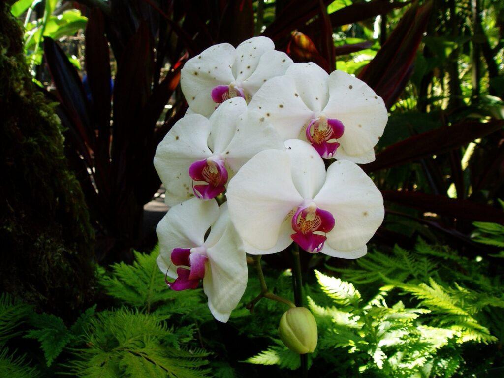orkide çiçekler ne anlama gelir?